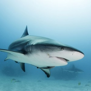 rechin-mercur