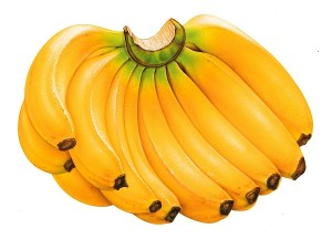 yellow-bananas-wallpapers-desktop
