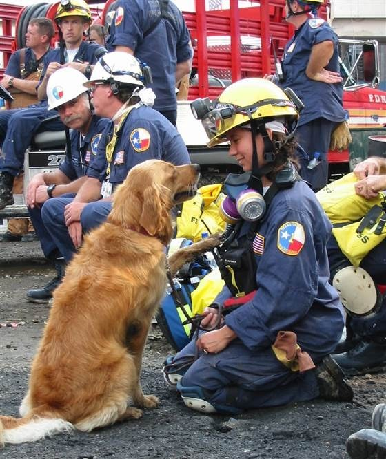 Ultimul câine erou după 11 septembrie 2001-1