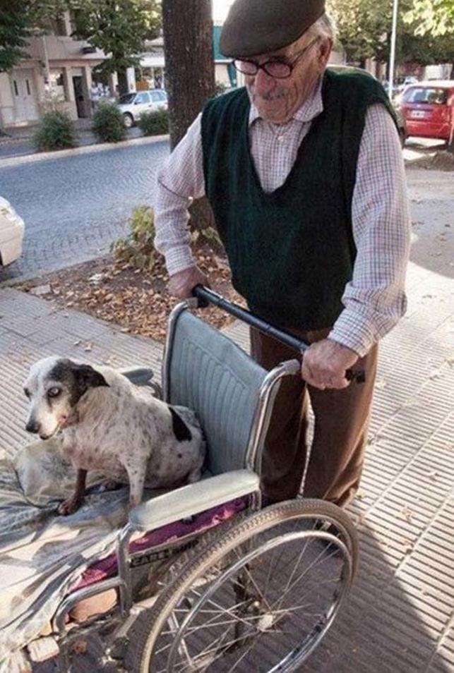 batranul care isi plimba cainele bolnav in scaun
