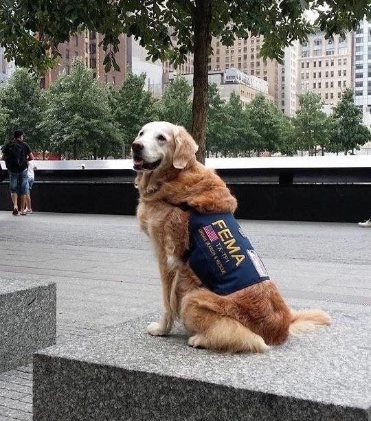 cainele erou de la 11 septembrie 2001