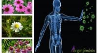 Trecerea bruscă de la caldură la frig iţi poate da imunitatea peste cap. Află cum să previi acest lucru, cu ajutorul plantelor!