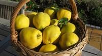 Aceste fructe aromate ne ajută să slăbim, ne întăresc sistemul imunitar și astfel ne feresc de răcelile sezoniere. Însă lista numeroaselor beneficii nu se oprește aici!
