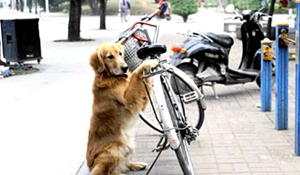 Acesta este cu siguranţă cel mai bun antifurt de bicicletă!