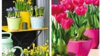 Moda oferirii florilor plantate în ghivece este tot mai des întâlnită tocmai pentru a ne bucura de frumusețea lor și în anii următori. Vezi care sunt pașii de replantare ale florilor de primăvară.