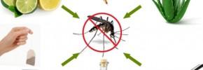 7 remedii naturale pentru muşcăturile de ţânţari