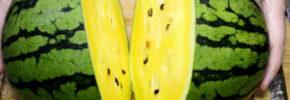 Pepene verde cu miez galben – Ce gust are și metoda rapidă de tăiere