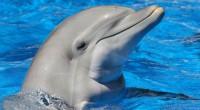 Să fim cu adevărat doar noi singura specie, capabilă de gândire şi compasiune?  Priviţi cum ajută aceşti delfini un pui de focă, aflat în derivă. Pur şi simplu de necrezut..