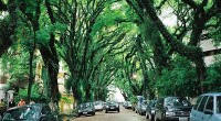 Ţi-ar plăcea să mergi pe o astfel de stradă?
