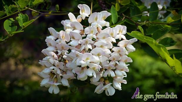 Vezi pentru ce afecțiuni sunt utile florile de salcâm și cum trebuie să le folosești pentru cele mai bune rezultate.