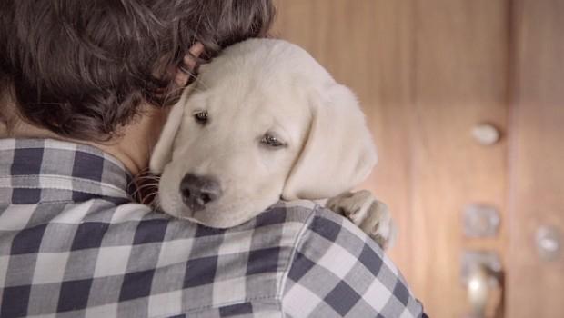 Acest videoclip ne arată iubirea necondiționată pe care ne-o poartă cel mai loial prieten al nostru, câinele.