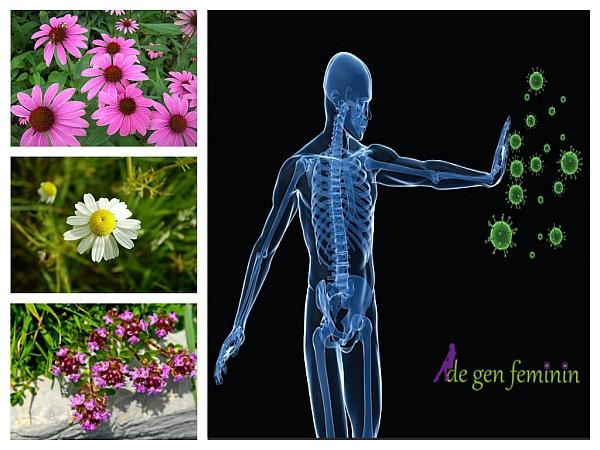 plante pentru imunitate)