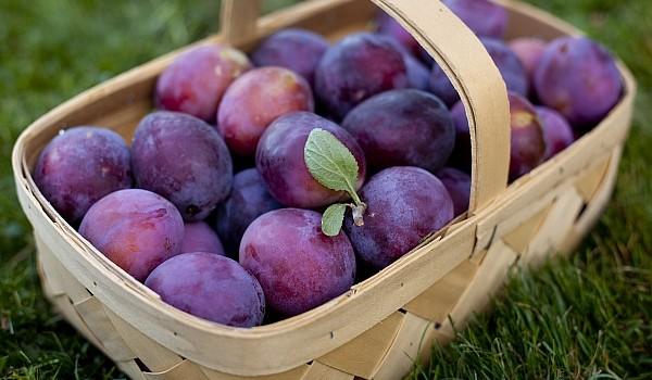 Ne mențin cât mai tineri, ne ajută să slăbim și ne mențin ficatul cât mai sănătos, însă lista beneficilor prunelor nu se oprește aici.