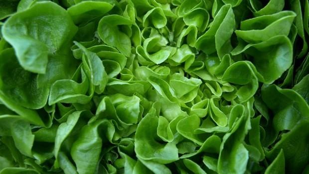 Știai că salata verde calmează nervii și induce rapid o senzație de sațietate? Însă, beneficiile acesteia nu se opresc aici! Află tot ce trebuie să știi despre salata verde.