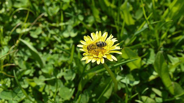 De fiecare dată când îți vine să te plângi că muncești prea mult, amintește-ți că albinele nu fac grevă atunci când le este furată mierea.